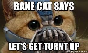 Turnt Up Meme - bane cat says let s get turnt up bane cat meme generator