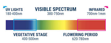what color light do plants grow best in cannabis cultivation the light spectrum and ways to raise thc