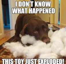 Chocolate Lab Meme - 10 best lab meme images on pinterest funny animal funny animal
