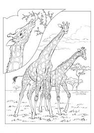 kids fun 45 coloring pages giraffe