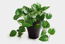 plant on desk desk plants will bring life to your office cool material