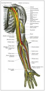 Nerves In The Knee Anatomy Diseases Of The Peripheral Nerves Emedmd Com