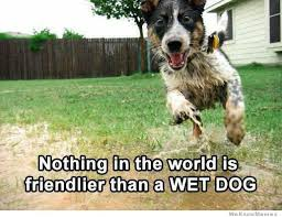 Wet Meme - nothing in the world is friendlier than a wet dog weknowmemes