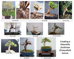 wildtype native plant nursery reddit please allow me to introduce you to the art of bonsai pics