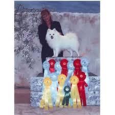 american eskimo dog ireland paulaspolar pups american eskimo dog breeder in fort nelson