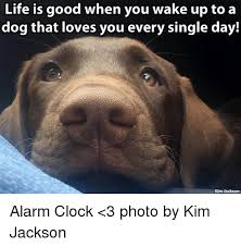 Life Is Good Meme - 25 best memes about life is good life is good memes