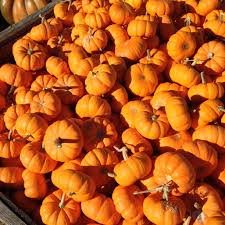 Halloween Candy Poem October 2013 Jama U0027s Alphabet Soup