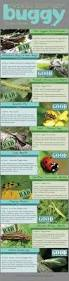 guide to 10 garden bugs good and bad and how you get rid of