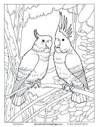 59 free jungle bird coloring pages adults cockatoo coloring