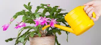 common diseases problems for indoor plants dave u0027s garden