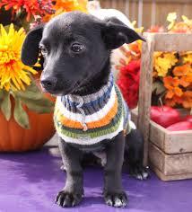 puppy thanksgiving thanksgiving steven tyler yorkie at large