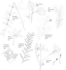 the top 75 u201d wetland plants among the stately trees