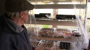 gardening in april part 2 cheap indoor greenhouse u0026 how the