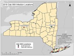 Brooklyn College Map Oak Wilt Found In Six New New York Locations Cornell Chronicle