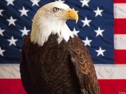 Bald Eagle On Flag Desktop Pictures Of Bald Eagles And American Flags