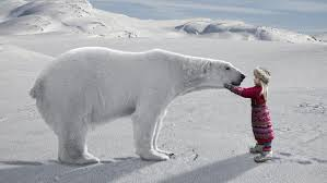 what are some interesting facts about the arctic for