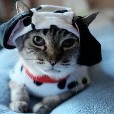 Kitten Halloween Costume Diy Cat Costumes Popsugar Australia Smart Living