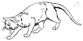 coloring pages medium image scottish fold breed cat