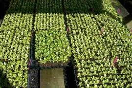 plant nursery tauranga plants for sale bop nz