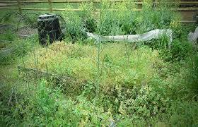 your survival garden u0027s worst enemy weeds the prepper journal