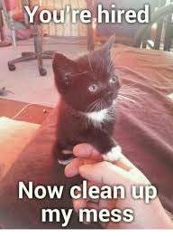 Grumpy Cat Meme Clean - you hired now clean up my mess grumpy cat meme on sizzle