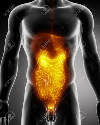 Human Male Anatomy Male Anatomy Of Human Organs In X Ray View Stock Photo Picture