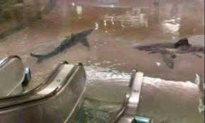 bureau de change chatelet sharks in chatelet and uber boats parisians see side of