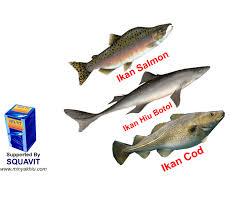 Minyak Ikan Blackmores membandingkan kandungan manfaat minyak ikan salmon hiu cod