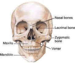skull definition of skull by dictionary