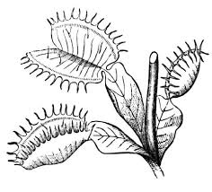 venus fly trap coloring free printable coloring pages