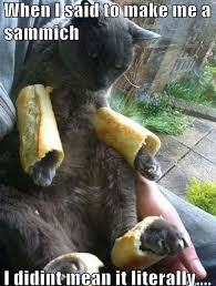 Sammich Meme - friday 3 11 2017 the café bites into sandwich day the daily kitten
