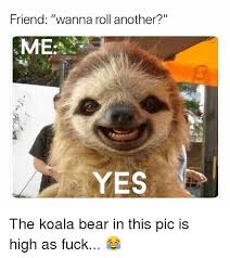 High Koala Meme - friend wanna roll another me yes the koala bear in this pic is