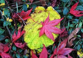 free images tree nature leaf flower botany garden flora