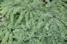 native plant symposium and plant growing native plants make and take terrarium garden u2013 bowman u0027s