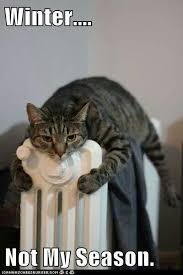 Funny Cold Meme - 90 best winter blahs images on pinterest ha ha funny stuff
