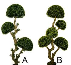 Topiary Outdoor Boxwood Tree Foshan Regalson Artificial Arts Co Ltd Artificial