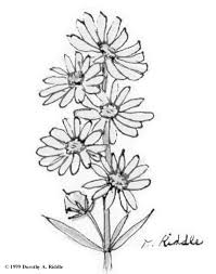 texas wildflowers coloring book patterns templates
