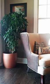 122 best house plants care images on pinterest house plants