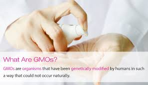 Amige 170712 What Are Gmos Jpg