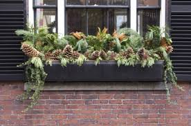 Plants For Winter Window Boxes - green thumb vs winter blues bees and roses