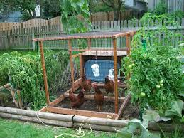 backyard vegetable garden house design with chicken coop and wire