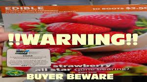 all star strawberry from walmart pt2 warning don u0027t buy