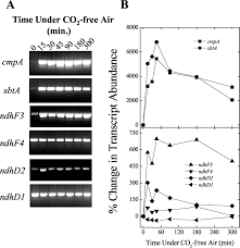 Chp 180 Inorganic Carbon Limitation And Light Control The Expression Of