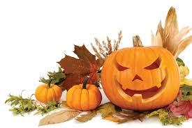 kirkland halloween curious kat u0027s recipe for the best halloween ever u2013 curious kat u0027s