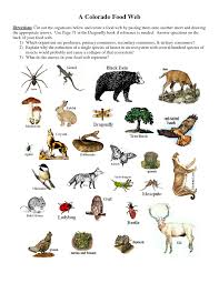 producers consumers and decomposers worksheet producers