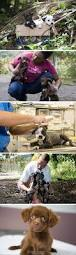 235 best animal rescue images on pinterest animal rescue dogs