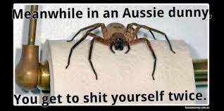 Australian Memes - australian meme funny memes part 2