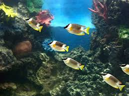 india s centre of excellence for ornamental fishes