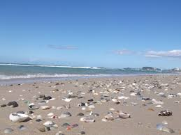 birds seaside flora shells surf and sun u2026 u2026 u2026what a micro climate