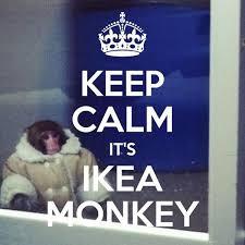 Ikea Monkey Meme - twitter image keep calm it s ikea monkey keepcalm ikeamonkey